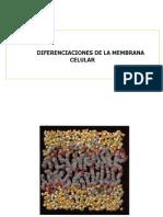 Diferenciaciones de La Membrana Celular