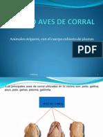 6 GRUPO AVES DE CORRAL.ppsx