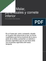 Hueso Malar, Paranasales y Cornete Inferior