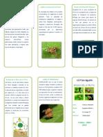 triptico mosca de la fruta.pdf