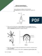 Phylum Coelenterata Classification