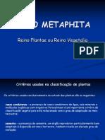11.Filo Briophyta e Tracheophyta