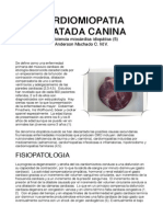 Cardiomiopatia Dilatada Canina (1)