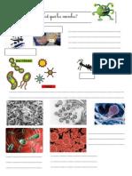 hygiene-microbes-Fiche-élève-PDF