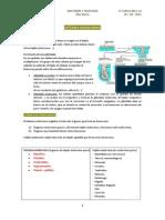Anatomía y fisiología 2º curso 2011-12