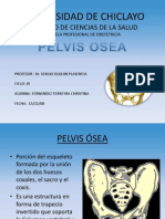 Pelvis Osea Dispositivas (1)[1]