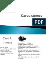 Casos Ratones S