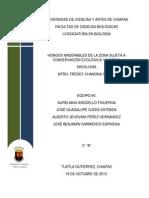 Protocolo de investigación 2 - Micología