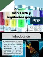 Estructura y regulación génica (1)