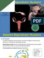 Ricardi Sistema Reprodutor