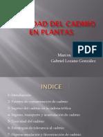 Cadmio en Las Plantas