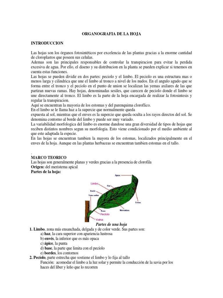 Organografia de La Hoja