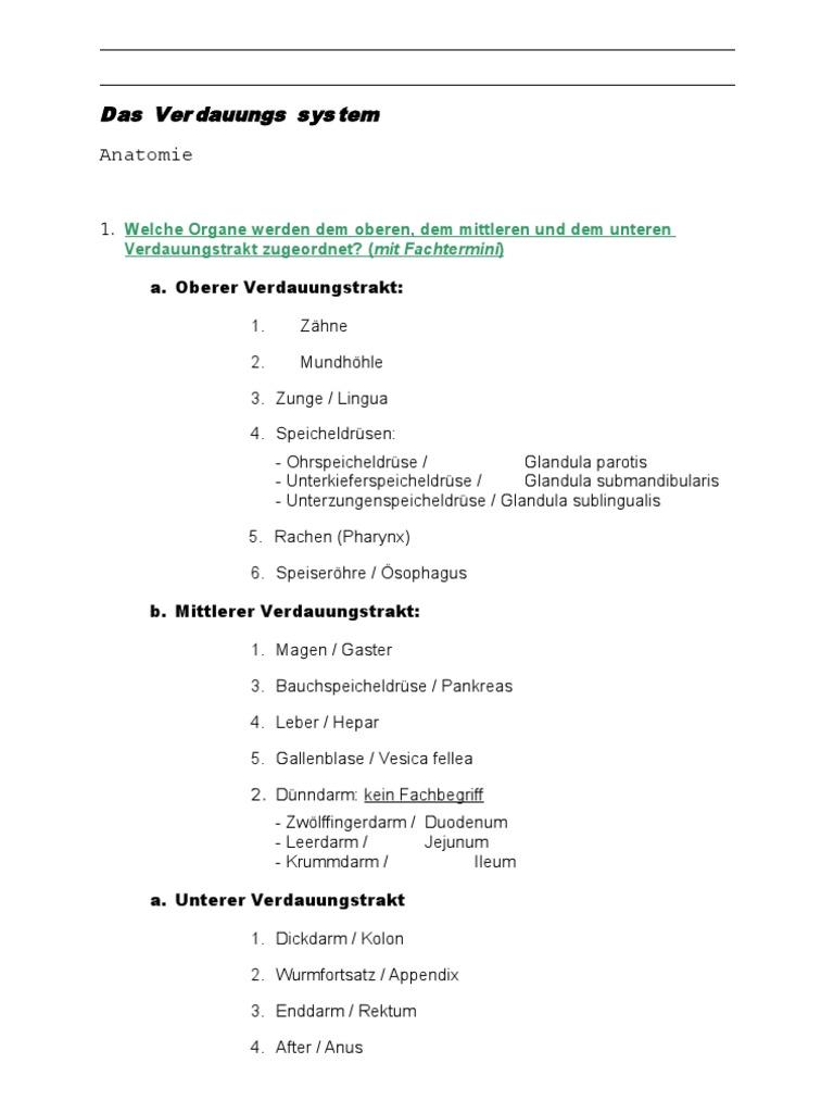 Anatomie Krankheitslehre Verdauungssystem