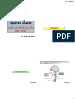 Vascularización del SNC (1)