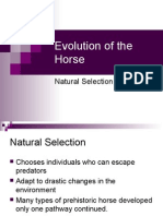 1-Evolution of the Horse