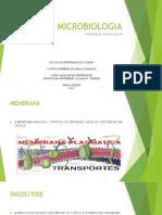 Microbiologia - Estudo Para a Prova