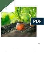 Aκτινοβολίες, ακτινοθεραπεία και διαιτολογική υποστήριξη..pdf