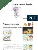 Phylum Coelenterata
