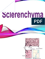Sclerenchyma.ppt