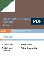 anatomi panggul.ppt