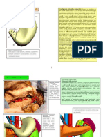 LP 19 STOMACUL SPLINA.pdf