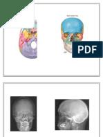 Neumo de Anatomia