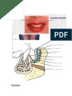 oral biologi gambar