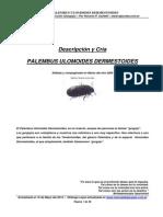 Descripcion y Cria Palembus Ulomoides Dermestoides Gorgojo de La Harina (1)