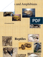 Reptiles and Amphibians ppt