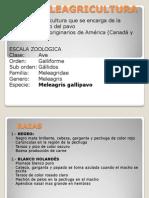Clase 03.Meleagricultura
