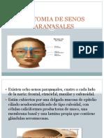 anatomiadesenosparanasales-120430151037-phpapp02