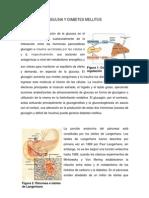Insulina y Diabetes Mellitus