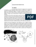 Ferrofluidi Loro Applicazioni-2