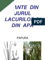 PLANTE DIN ROMANIA.ppt