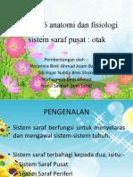 Pjm 3106 anatomi dan fisiologi saraf.pptx