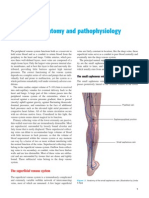 Vein Anatomy and Function