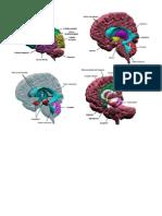 Cerebro Imagenes