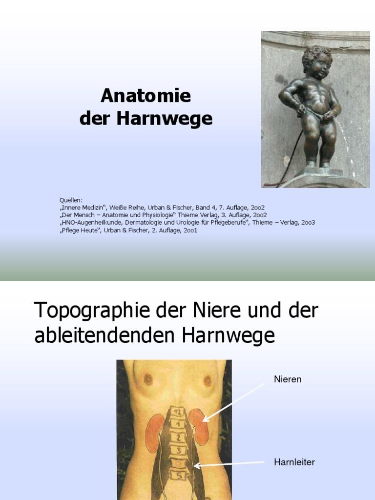 Harnwege.pdf