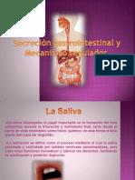 Secreción gastrointestinal y mecanismo regulador 2
