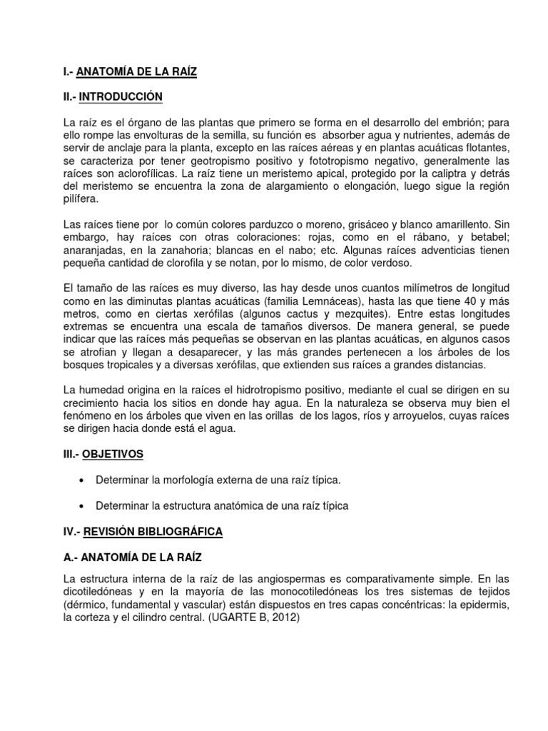 INFORME DE BOTÁNICA