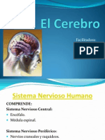 EL CEREBRO.ppt