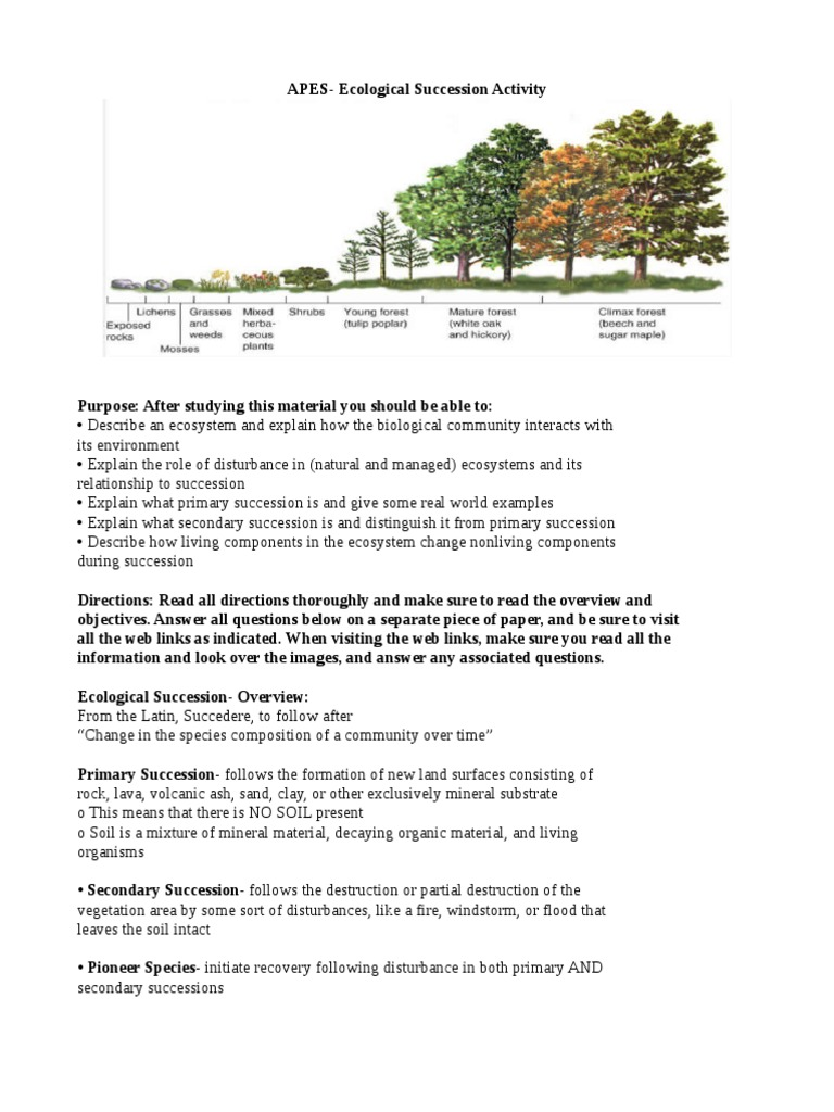 Uncategorized Ecological Succession Worksheet Answers ecological succession activity ecosystem disturbance ecology