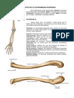 Osteologia de Extremidades