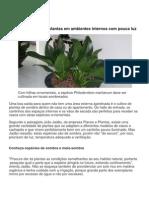 Veja Como Cultivar Plantas Em Ambientes Internos Com Pouca Luz