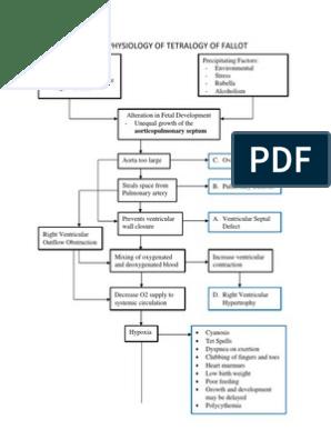 PATHOPHYSIOLOGY OF TETRALOGY OF FALLOT.docx on nephrotic syndrome pathophysiology, retinopathy of prematurity pathophysiology, typhoid fever pathophysiology, chronic obstructive pulmonary disease pathophysiology, cardiac tamponade pathophysiology, mitral valve stenosis pathophysiology, cushing's syndrome pathophysiology, sarcoidosis pathophysiology, bronchiolitis pathophysiology, mitral valve regurgitation pathophysiology, atrial flutter pathophysiology, ankylosing spondylitis pathophysiology, unstable angina pathophysiology, aspiration pneumonia pathophysiology, cardiogenic shock pathophysiology, umbilical hernia pathophysiology, pleural effusion pathophysiology, meningitis pathophysiology, aortic stenosis pathophysiology, alzheimer's disease pathophysiology,