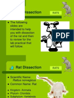 Rat Dissection Without Muscles(1)