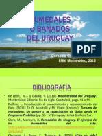 Humedales o Bañados del Uruguay