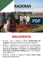 Praderas Del Uruguay