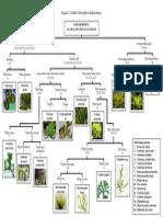 BDK Chlorophyta Makro.docx