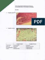 Praktikum Histo Blok 14.pdf